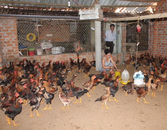 Một số lưu ý trong chăn nuôi trước và sau mùa mưa bão